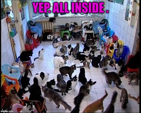 Crazy cat Lady | YEP. ALL INSIDE . | image tagged in crazy cat lady | made w/ Imgflip meme maker