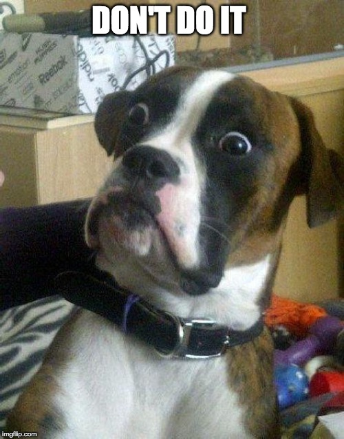 Surprised Dog | DON'T DO IT | image tagged in surprised dog | made w/ Imgflip meme maker