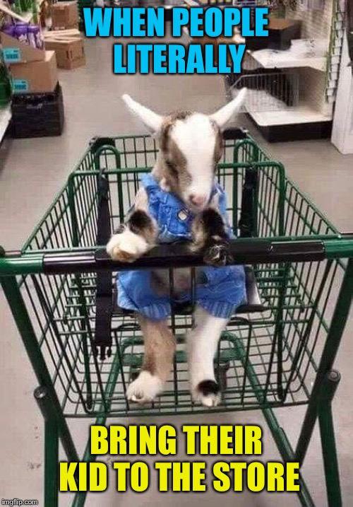 Just keep him in the cart, lady! | WHEN PEOPLE LITERALLY BRING THEIR KID TO THE STORE | image tagged in kid,goat,store,shopping cart,cute,memes | made w/ Imgflip meme maker