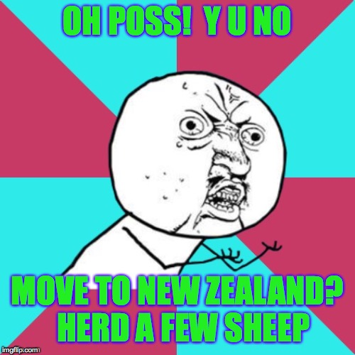 OH POSS!  Y U NO MOVE TO NEW ZEALAND?  HERD A FEW SHEEP | image tagged in y u no music | made w/ Imgflip meme maker