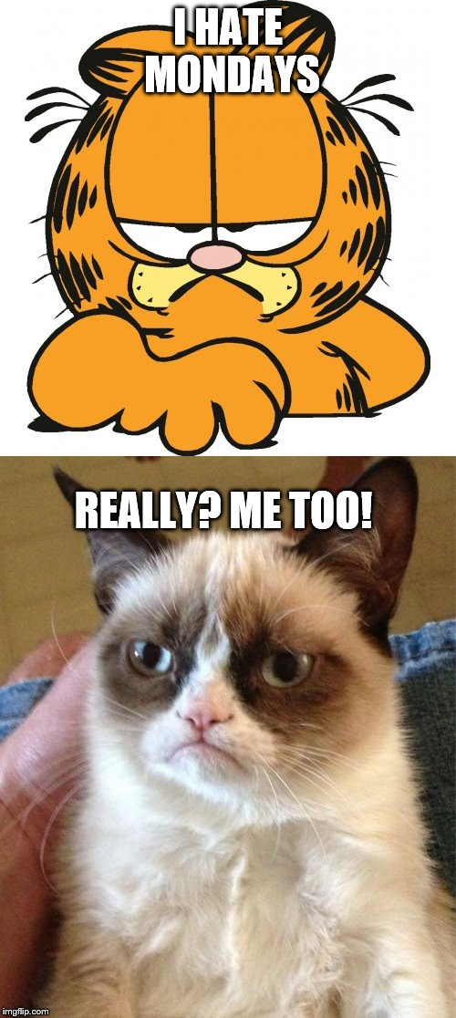 I HATE MONDAYS REALLY? ME TOO! | image tagged in garfield | made w/ Imgflip meme maker
