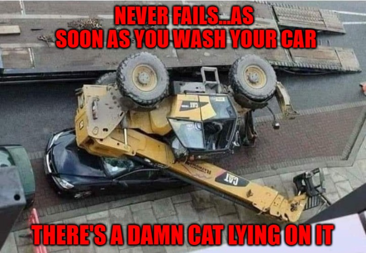 Murphy's Law every time. | NEVER FAILS...AS SOON AS YOU WASH YOUR CAR THERE'S A DAMN CAT LYING ON IT | image tagged in cat on your car,memes,murphy's law,funny,cats,bad luck | made w/ Imgflip meme maker
