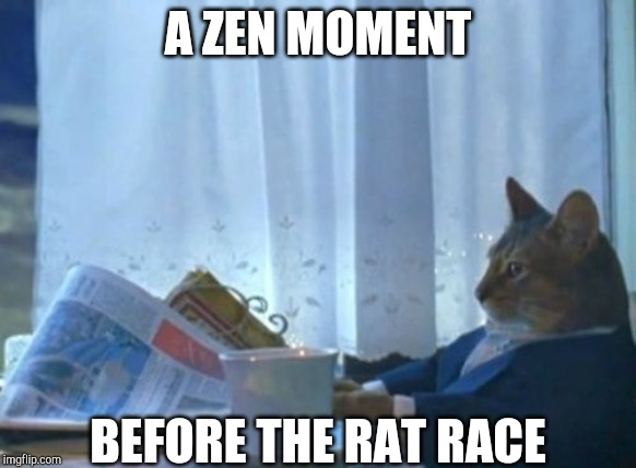 I Should Buy A Boat Cat Meme | A ZEN MOMENT BEFORE THE RAT RACE | image tagged in memes,i should buy a boat cat | made w/ Imgflip meme maker