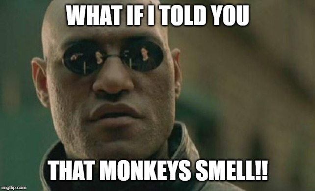 Matrix Morpheus Meme | WHAT IF I TOLD YOU THAT MONKEYS SMELL!! | image tagged in memes,matrix morpheus | made w/ Imgflip meme maker