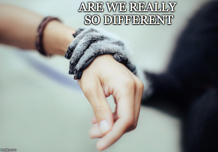 Are We | ARE WE REALLY SO DIFFERENT | image tagged in hands,human,monkey,life,nature,different | made w/ Imgflip meme maker