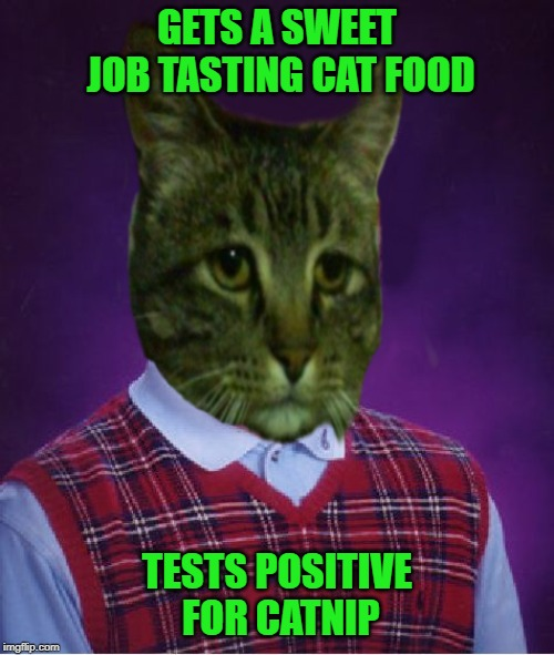 "Introducing ""Bad Luck Kitty"" for your memeing pleasure. 
