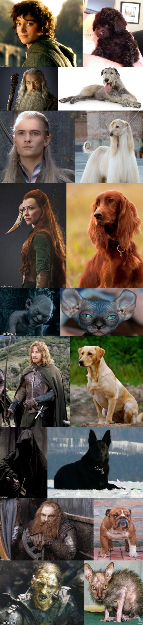 Lord of the Pets | image tagged in lord of the rings,the hobbit,dogs,doppelgnger,pets,funny | made w/ Imgflip meme maker