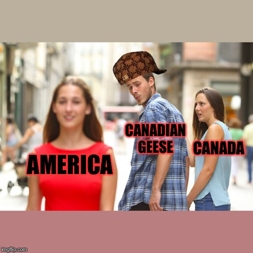 Distracted Boyfriend Meme |  CANADIAN GEESE; CANADA; AMERICA | image tagged in memes,distracted boyfriend | made w/ Imgflip meme maker
