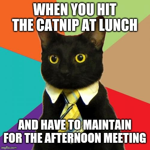 Business Cat | WHEN YOU HIT THE CATNIP AT LUNCH AND HAVE TO MAINTAIN FOR THE AFTERNOON MEETING | image tagged in memes,business cat | made w/ Imgflip meme maker