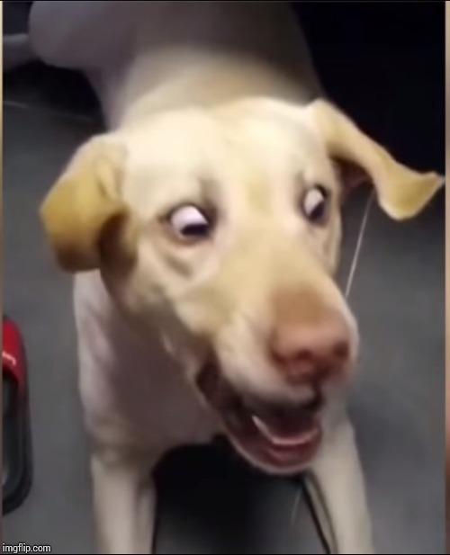 DOG SCARED | image tagged in dog scared | made w/ Imgflip meme maker