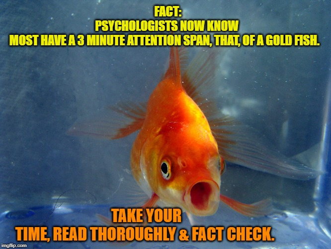 Attention Span of a Gold Fish | FACT: PSYCHOLOGISTS NOW KNOW MOST HAVE A 3 MINUTE ATTENTION SPAN, THAT, OF A GOLD FISH. TAKE YOUR TIME, READ THOROUGHLY & FACT CHECK. | image tagged in news,ads,trump | made w/ Imgflip meme maker