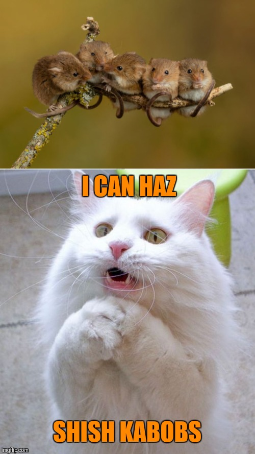 I wish to haz them roasted | I CAN HAZ SHISH KABOBS | image tagged in memes,shish kabobs,food,i can has cheezburger cat,mice,44colt | made w/ Imgflip meme maker