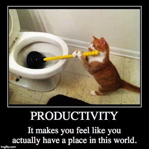 PRODUCTIVITY | PRODUCTIVITY | It makes you feel like you actually have a place in this world. | image tagged in funny,demotivationals,cats | made w/ Imgflip demotivational maker