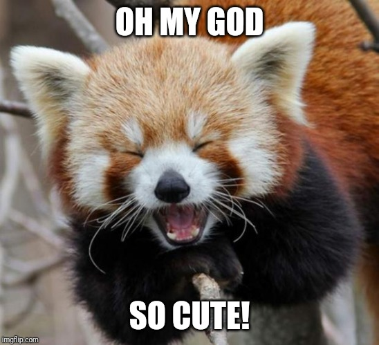 Red Panda | OH MY GOD SO CUTE! | image tagged in red panda | made w/ Imgflip meme maker