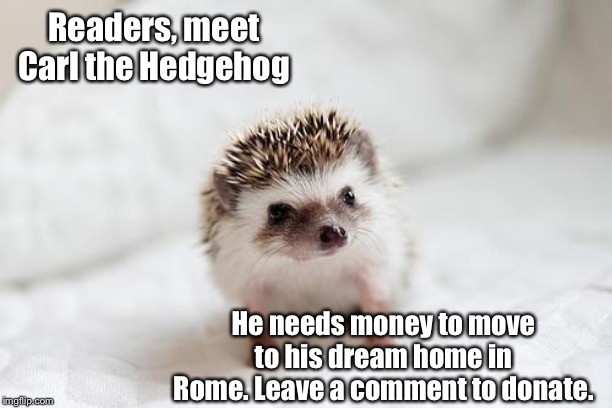 Donate to Carl! | Readers, meet Carl the Hedgehog He needs money to move to his dream home in Rome. Leave a comment to donate. | image tagged in hedgehog,rome,memes,wholesome | made w/ Imgflip meme maker