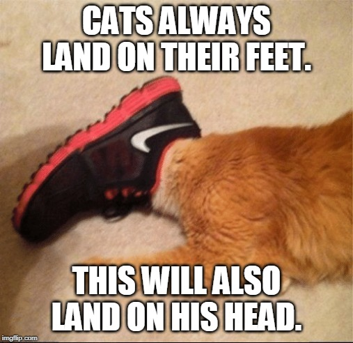 SHOEHEAD | CATS ALWAYS LAND ON THEIR FEET. THIS WILL ALSO LAND ON HIS HEAD. | image tagged in shoe head cat,cats,cat | made w/ Imgflip meme maker