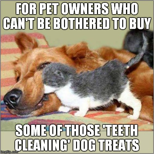 Doggy Dental Treat | FOR PET OWNERS WHO CAN'T BE BOTHERED TO BUY SOME OF THOSE 'TEETH CLEANING' DOG TREATS | image tagged in fun,dogs | made w/ Imgflip meme maker