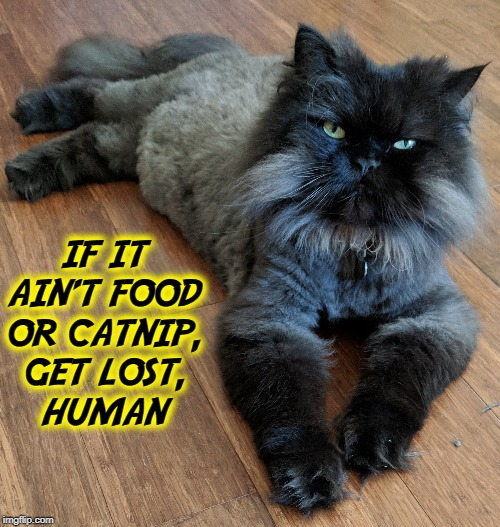 Tiberius the Cruel Rules with a Vengeful Heart | IF IT AIN'T FOOD OR CATNIP, GET LOST,    HUMAN | image tagged in vince vance,cats,stately,9 lives,cruel,mean | made w/ Imgflip meme maker