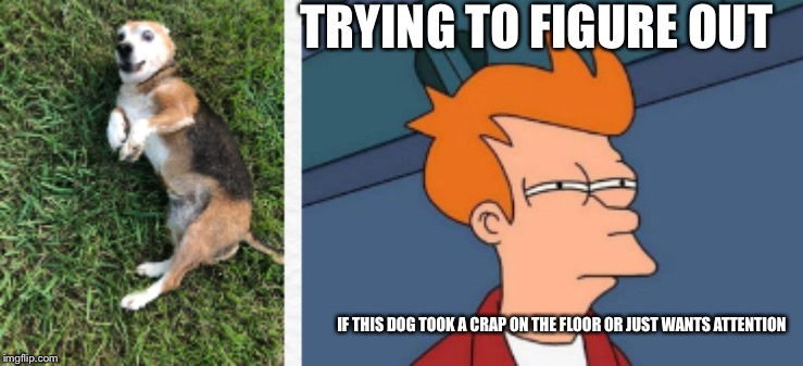 dogs can be deceptive | TRYING TO FIGURE OUT IF THIS DOG TOOK A CRAP ON THE FLOOR OR JUST WANTS ATTENTION | image tagged in futurama fry,dog,deception,funny,memes,meme | made w/ Imgflip meme maker