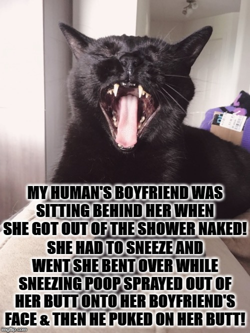 JERK |  MY HUMAN'S BOYFRIEND WAS SITTING BEHIND HER WHEN SHE GOT OUT OF THE SHOWER NAKED! SHE HAD TO SNEEZE AND WENT SHE BENT OVER WHILE SNEEZING POOP SPRAYED OUT OF HER BUTT ONTO HER BOYFRIEND'S FACE & THEN HE PUKED ON HER BUTT! | image tagged in jerk | made w/ Imgflip meme maker