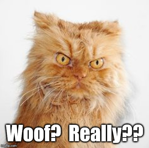 mean cat | Woof?  Really?? | image tagged in mean cat | made w/ Imgflip meme maker