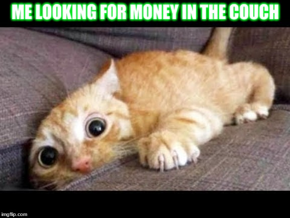 ME LOOKING FOR MONEY IN THE COUCH | image tagged in cat on a couch | made w/ Imgflip meme maker