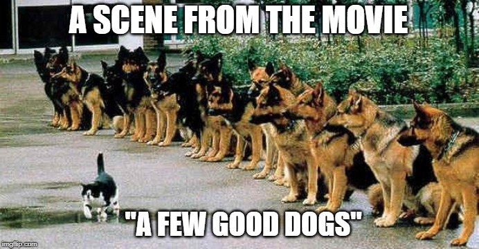 "dogs and cat |  A SCENE FROM THE MOVIE; ""A FEW GOOD DOGS"" 