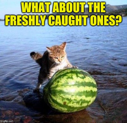 Argument invalid watermelon cat | WHAT ABOUT THE FRESHLY CAUGHT ONES? | image tagged in argument invalid watermelon cat | made w/ Imgflip meme maker