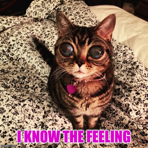 Alien Cat Poosh | I KNOW THE FEELING | image tagged in alien cat poosh | made w/ Imgflip meme maker