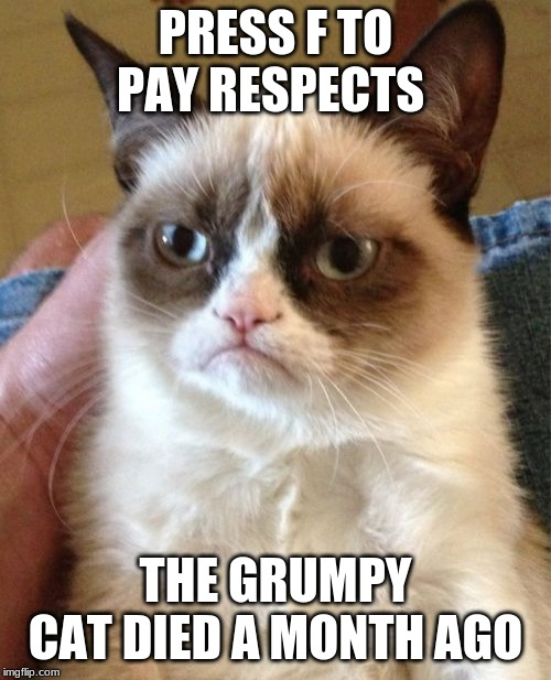 Grumpy Cat | PRESS F TO PAY RESPECTS THE GRUMPY CAT DIED A MONTH AGO | image tagged in memes,grumpy cat,rip,press f to pay respects | made w/ Imgflip meme maker