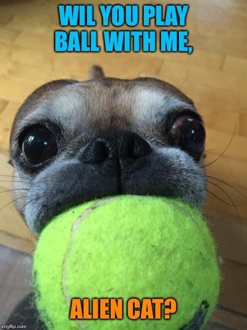 WIL YOU PLAY BALL WITH ME, ALIEN CAT? | made w/ Imgflip meme maker