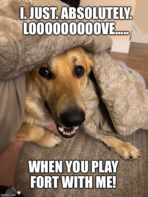Fort night! | I. JUST. ABSOLUTELY. LOOOOOOOOOVE..... WHEN YOU PLAY FORT WITH ME! | image tagged in funny dogs,dogs,funny memes,intelligent dog,funny dog memes,funny animals | made w/ Imgflip meme maker