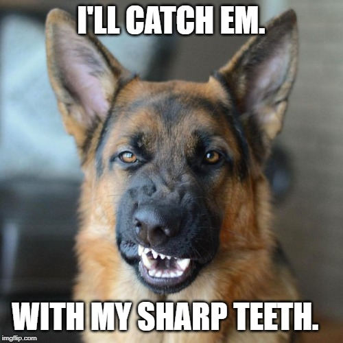 Mean DOG  | I'LL CATCH EM. WITH MY SHARP TEETH. | image tagged in mean dog | made w/ Imgflip meme maker