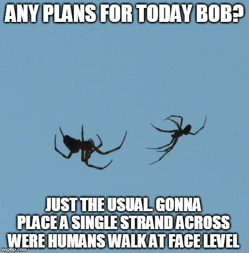 You know they do it on purpose! | ANY PLANS FOR TODAY BOB? JUST THE USUAL. GONNA PLACE A SINGLE STRAND ACROSS WERE HUMANS WALK AT FACE LEVEL | image tagged in spider web dance,stupid spiders | made w/ Imgflip meme maker