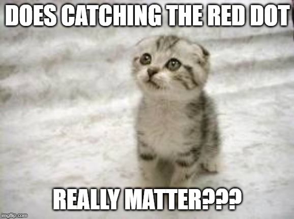 Sad Cat | DOES CATCHING THE RED DOT REALLY MATTER??? | image tagged in memes,sad cat | made w/ Imgflip meme maker