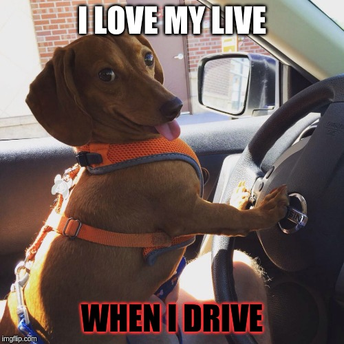 Wiener Dog in Car | I LOVE MY LIVE WHEN I DRIVE | image tagged in wiener dog in car | made w/ Imgflip meme maker