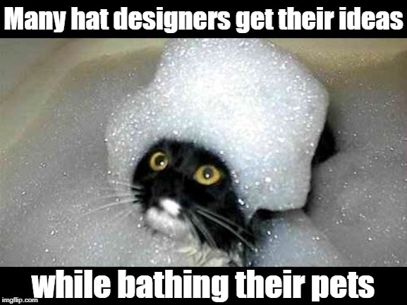 OMG! Don't move, sweety! Mommy's gotta take a picture of this! | Many hat designers get their ideas while bathing their pets | image tagged in cats,cute,funny,lol | made w/ Imgflip meme maker