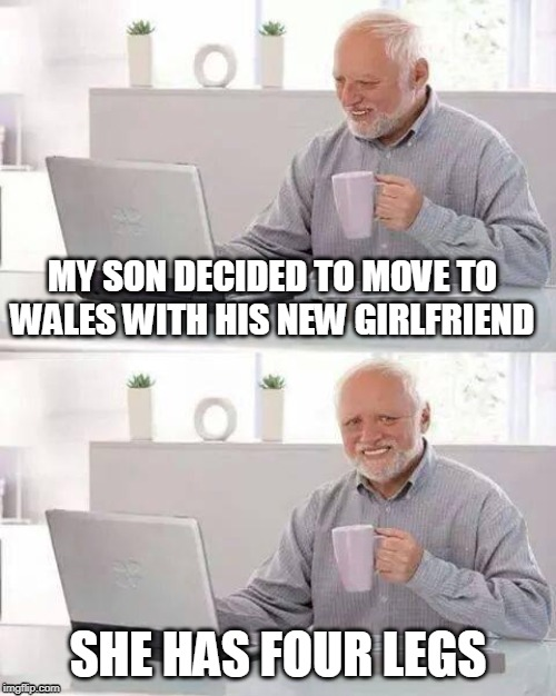Hide the Pain Harold | MY SON DECIDED TO MOVE TO WALES WITH HIS NEW GIRLFRIEND SHE HAS FOUR LEGS | image tagged in memes,hide the pain harold | made w/ Imgflip meme maker