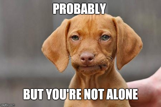 Dissapointed puppy | PROBABLY BUT YOU'RE NOT ALONE | image tagged in dissapointed puppy | made w/ Imgflip meme maker