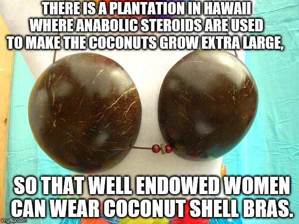 THERE IS A PLANTATION IN HAWAII WHERE ANABOLIC STEROIDS ARE USED TO MAKE THE COCONUTS GROW EXTRA LARGE, SO THAT WELL ENDOWED WOMEN CAN WEAR COCONUT SHELL BRAS. | image tagged in boobs,coconut shells | made w/ Imgflip meme maker