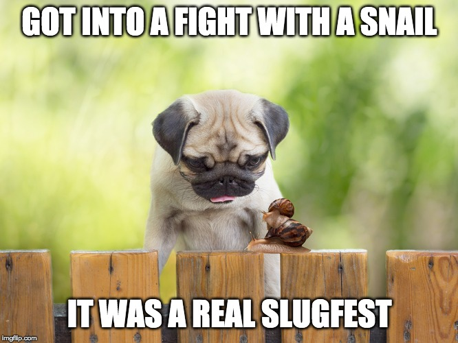 A Sticky Subject | GOT INTO A FIGHT WITH A SNAIL IT WAS A REAL SLUGFEST | image tagged in snail,slug,dog,fight,cute | made w/ Imgflip meme maker