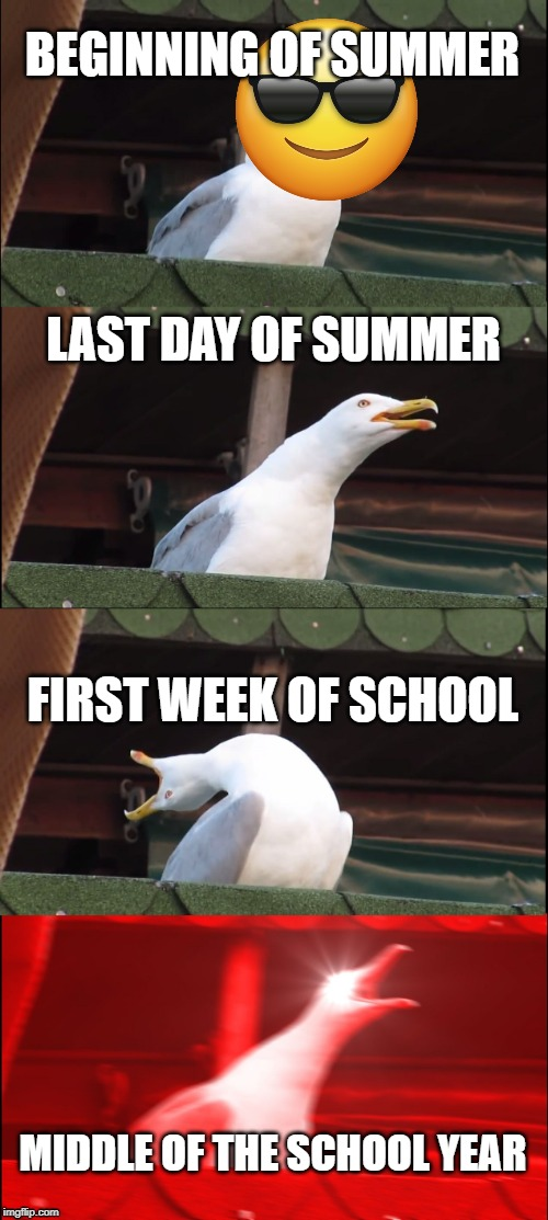 Inhaling Seagull | BEGINNING OF SUMMER LAST DAY OF SUMMER FIRST WEEK OF SCHOOL MIDDLE OF THE SCHOOL YEAR | image tagged in memes,inhaling seagull,school,summer,seagull,funny | made w/ Imgflip meme maker