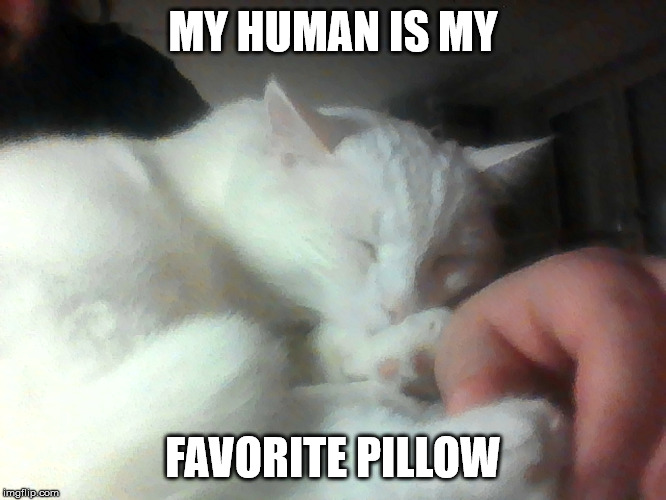 Literal arm rest | MY HUMAN IS MY FAVORITE PILLOW | image tagged in cute cat,sleeping,cozy,funny cats | made w/ Imgflip meme maker
