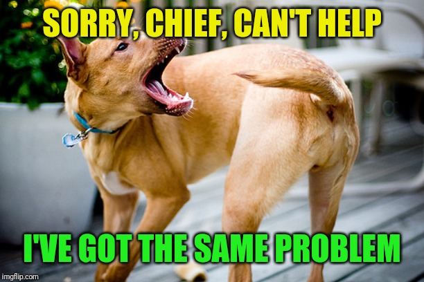 Dog chasing tail | SORRY, CHIEF, CAN'T HELP I'VE GOT THE SAME PROBLEM | image tagged in dog chasing tail | made w/ Imgflip meme maker