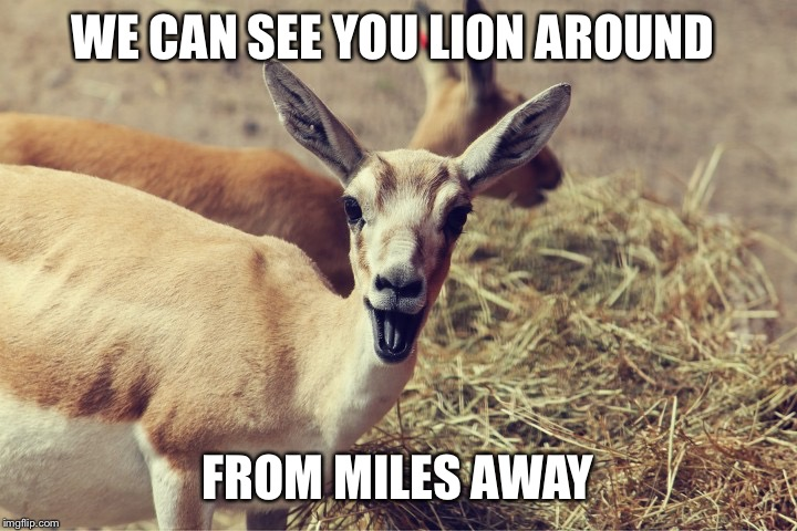 Laughing antelope | WE CAN SEE YOU LION AROUND FROM MILES AWAY | image tagged in laughing antelope | made w/ Imgflip meme maker