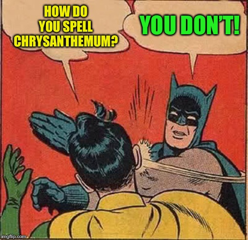Batman Slapping Robin Meme | HOW DO YOU SPELL CHRYSANTHEMUM? YOU DON'T! | image tagged in memes,batman slapping robin | made w/ Imgflip meme maker
