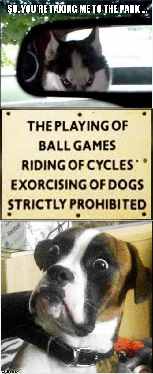 I Need To Exorcise My Dog | SO, YOU'RE TAKING ME TO THE PARK ... | image tagged in fun,dogs | made w/ Imgflip meme maker