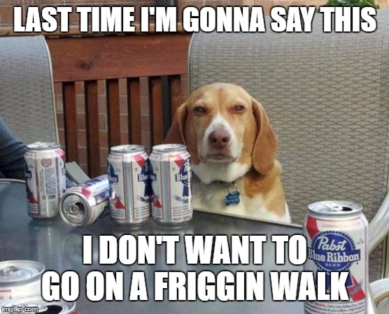 dog beer | LAST TIME I'M GONNA SAY THIS I DON'T WANT TO GO ON A FRIGGIN WALK | image tagged in dog beer,random,walk,drinking | made w/ Imgflip meme maker