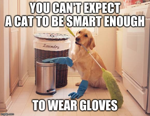 YOU CAN'T EXPECT A CAT TO BE SMART ENOUGH TO WEAR GLOVES | made w/ Imgflip meme maker