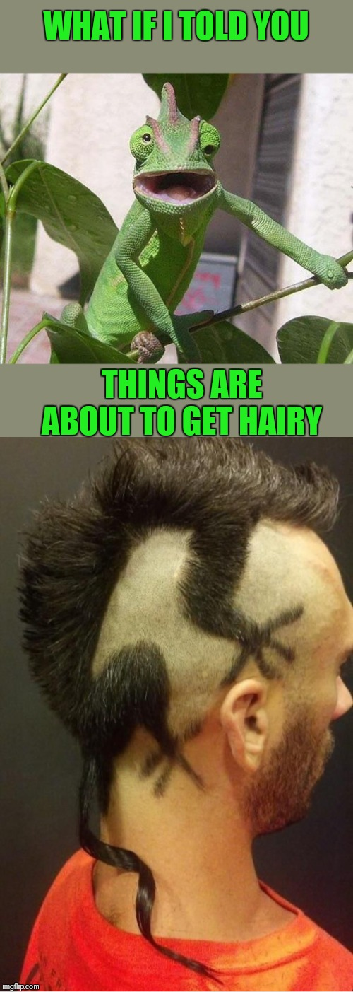 Hairouflage Camouflage | WHAT IF I TOLD YOU THINGS ARE ABOUT TO GET HAIRY | image tagged in crazy chameleon,memes,lizard,44colt,funny haircut,camouflage | made w/ Imgflip meme maker